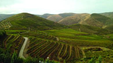 Photo of A quinta das quintas
