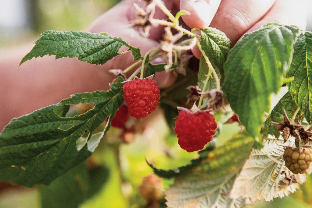 Nos domínios da frutopia