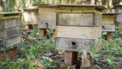 Photo of Valle Rustico ensina como criar abelhas sem ferrão