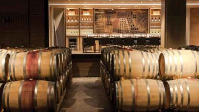 Photo of Casas del Bosque, vinícola chilena que vale o passeio