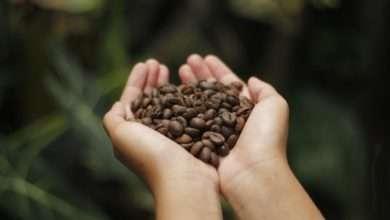 Photo of Nespresso lança cafés oriundos de programas sociais em prol da cultura cafeeira
