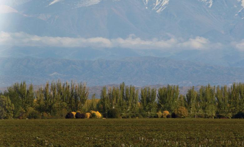 vinhedo de malbec na argentina