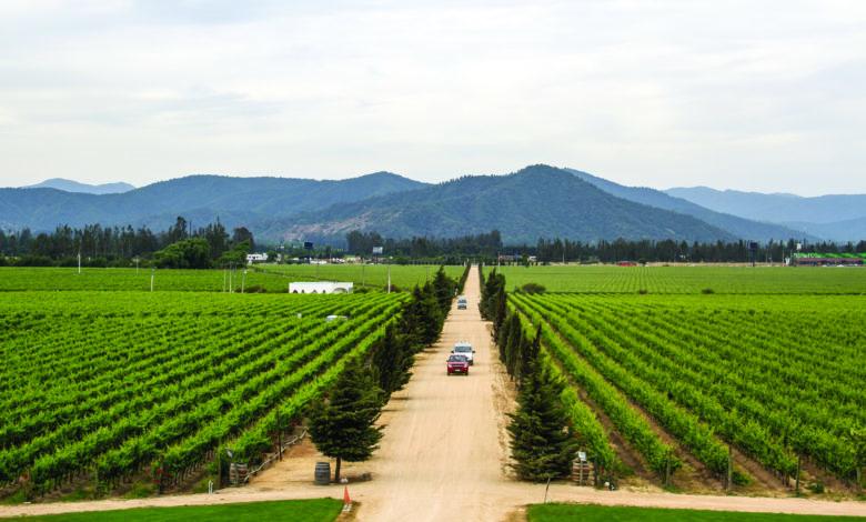 vinhos chilenos_quiz_ Foto: divulgação