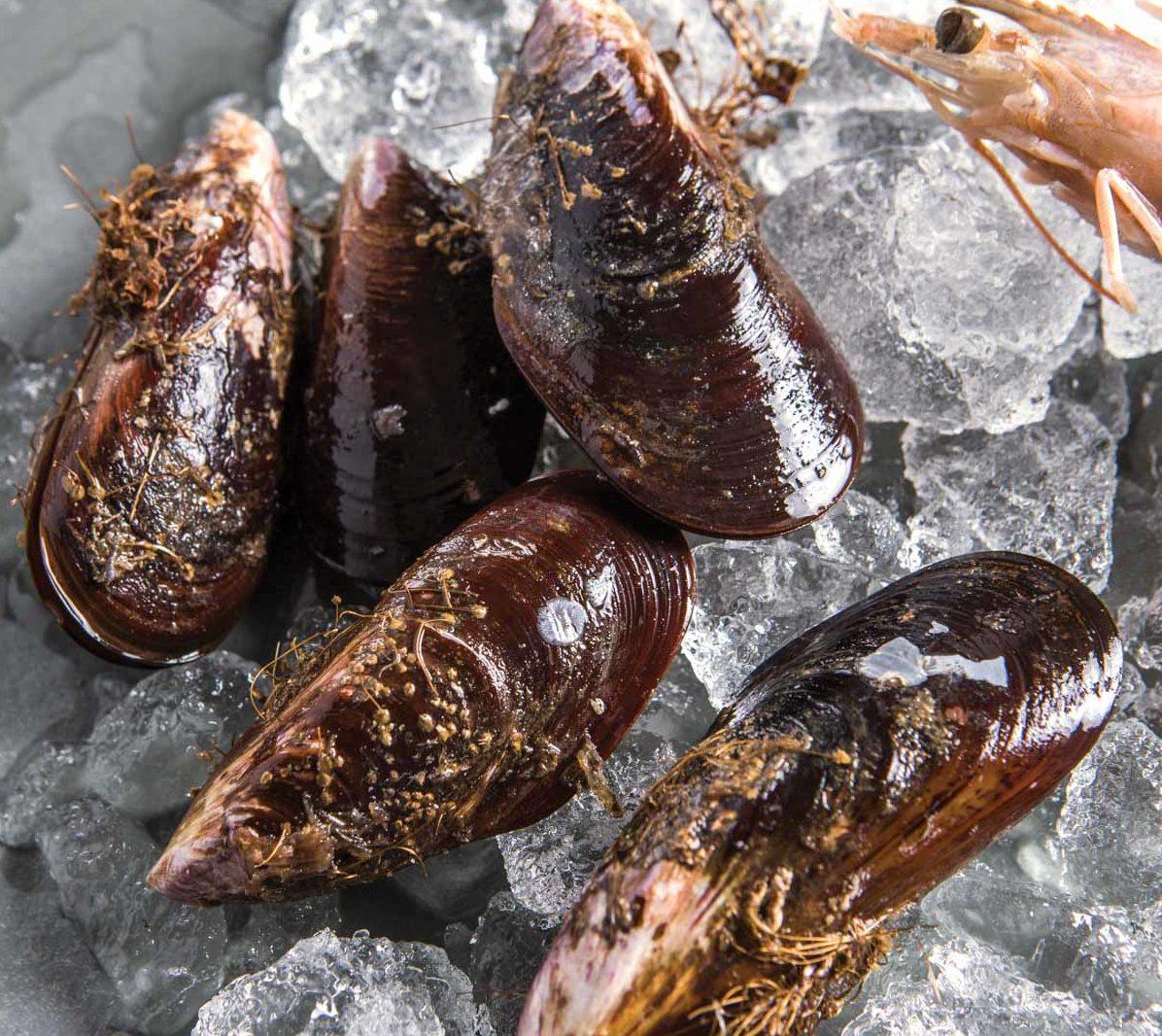 A concha de ostras, mexilhões e vôngoles precisa estar fechada na hora da compra