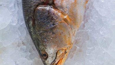 Photo of Dicas para comprar pescados