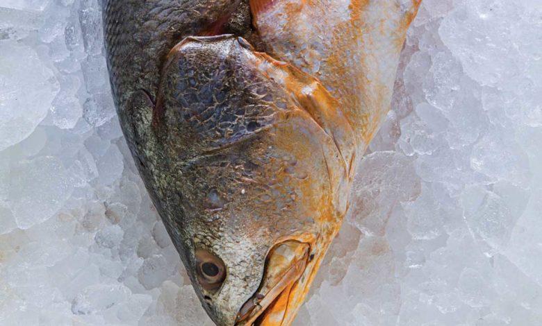 dicas pescados Fotos: RJ Castilho e divulgação