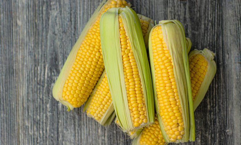 milho Foto: Pixabay, divulgação