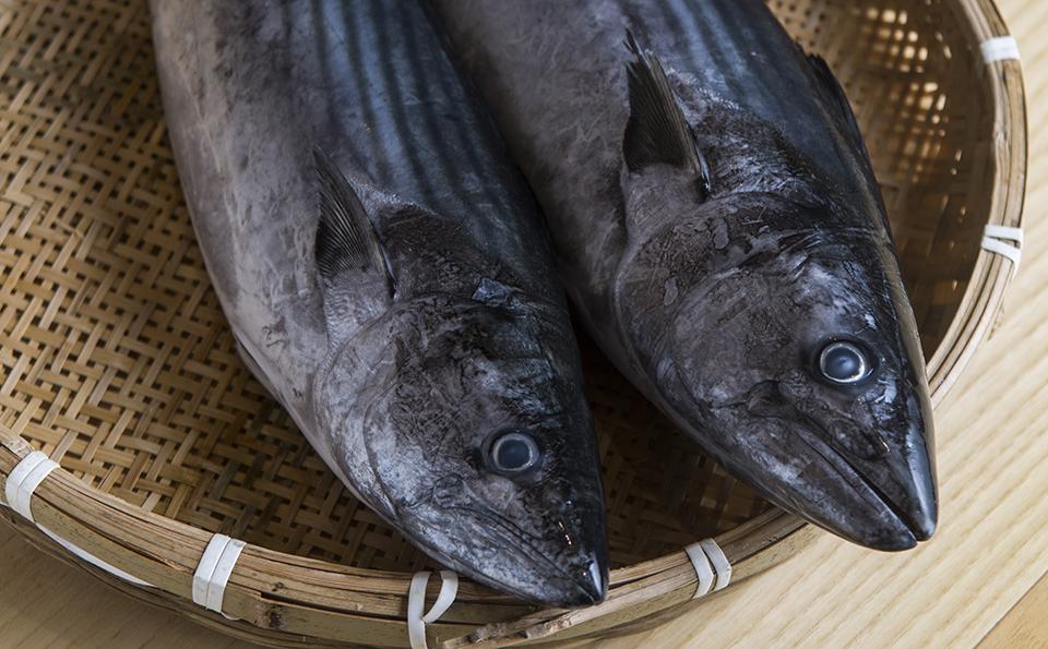 Peixe serra